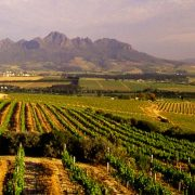 Simonsberg vineyards